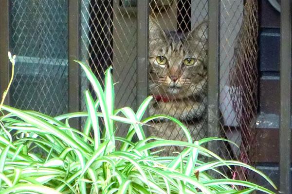 housecat_estate