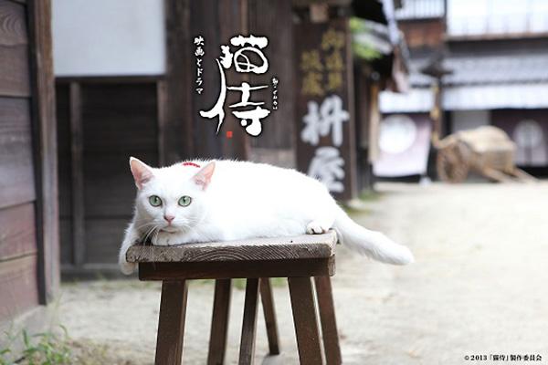 nekozamurai_tamanojyo