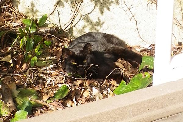 公園黒猫大人の方