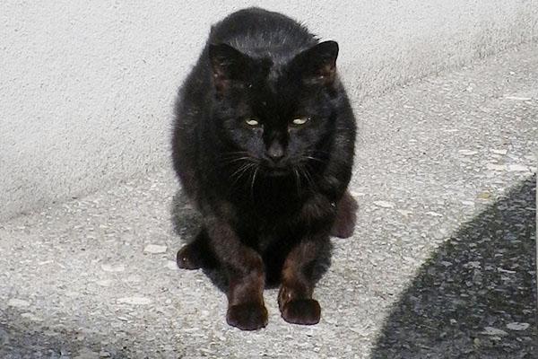 黒猫君 日産の車が並ぶ場所