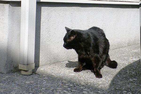 考え中黒猫君