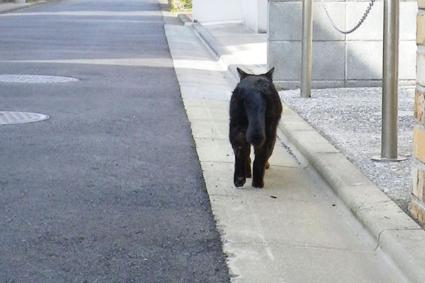 去る黒猫君