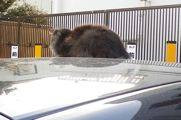 もふキジ君車の上背中