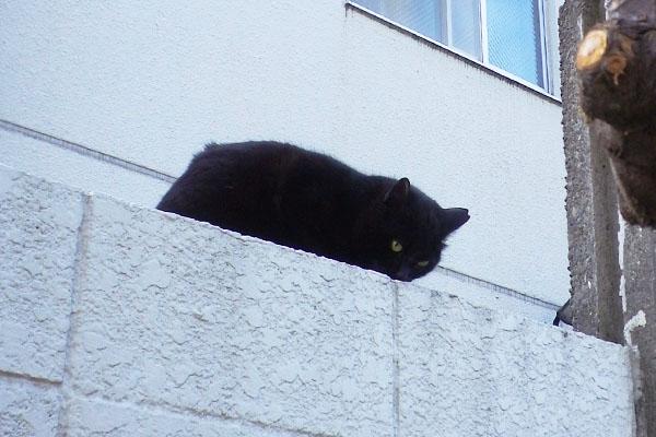 塀に登ったココちん
