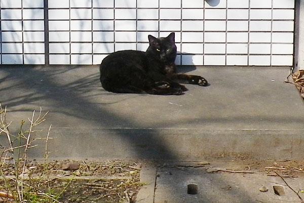 目を開けた黒猫さん