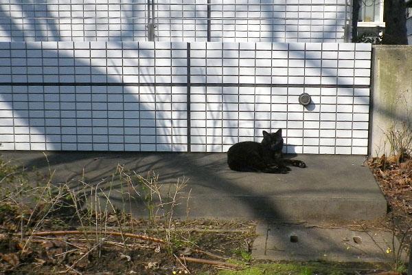 裏の公園に黒猫さん