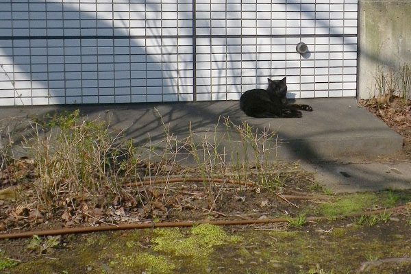 バイバイ黒猫さん