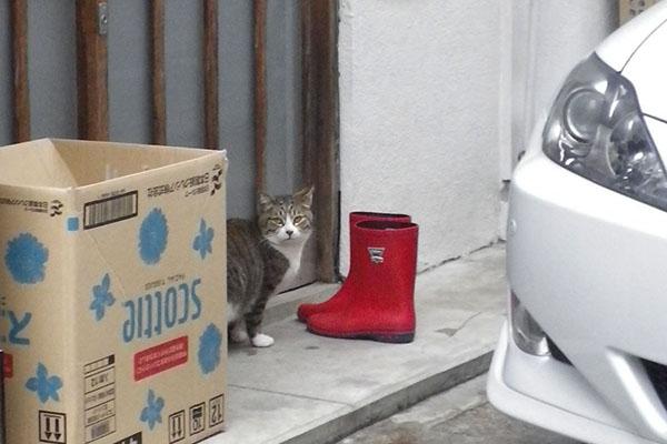 サーヤと赤い長靴