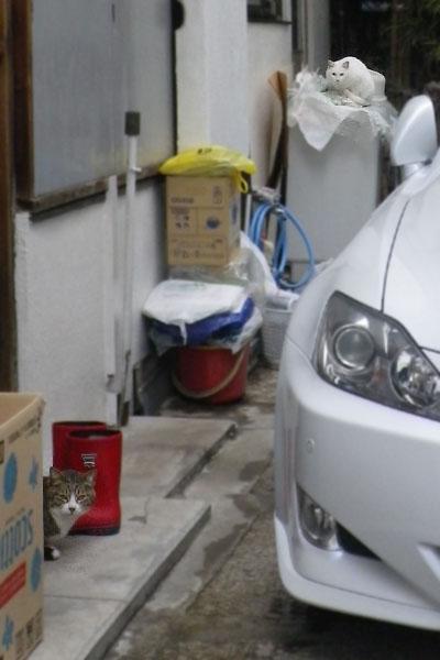 玄関と洗濯機