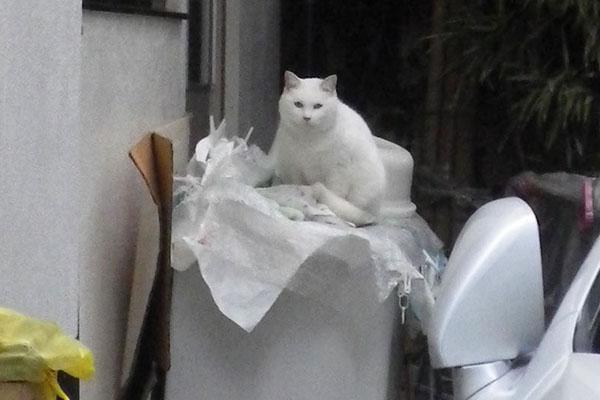 リリ洗濯機の上