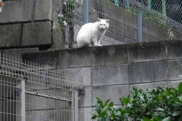 ハク塀の上