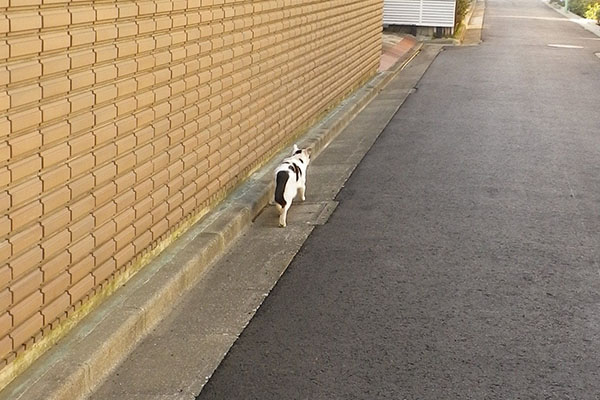 壁沿いを歩く坊