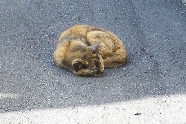寝ているサビ猫さん