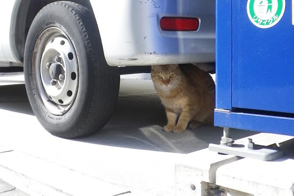 車の下から覗くクリーム