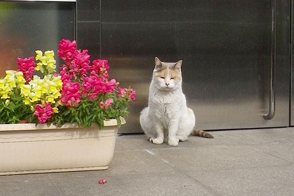 みけ姐と花first