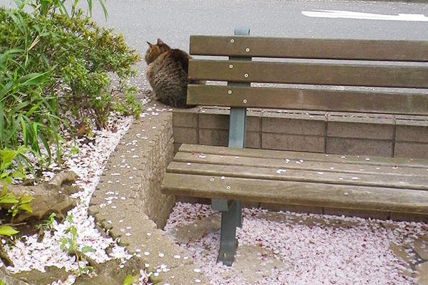 桜の花びらとマリィの背中