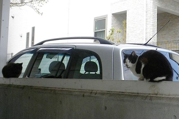 ハチワレさんと黒猫さん