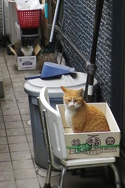 メロンの箱とたまねぎの箱
