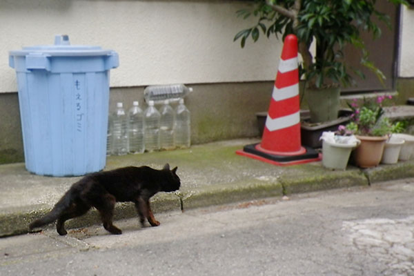歩くやせっぽちの黒猫さん