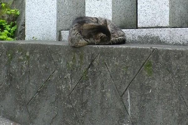 神社の参道で寝ていたツキ君