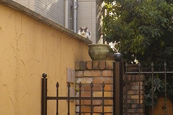 姉にゃん塀の上