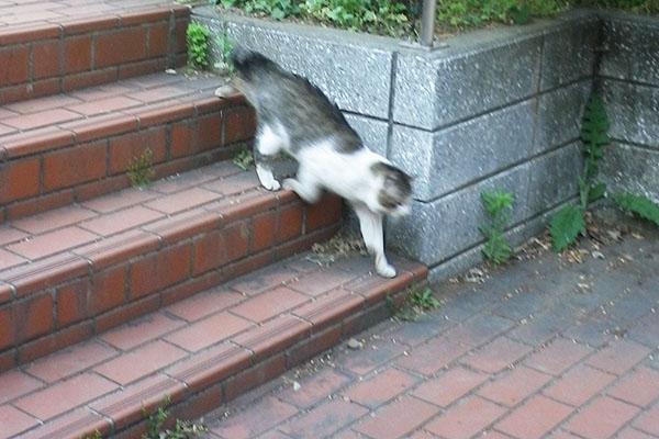 ダッシュで階段を降りる