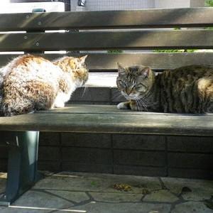 マリィとフォックスふたりでベンチ