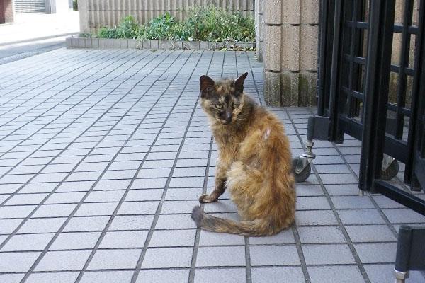 毛中がボサボサのサビ猫さん