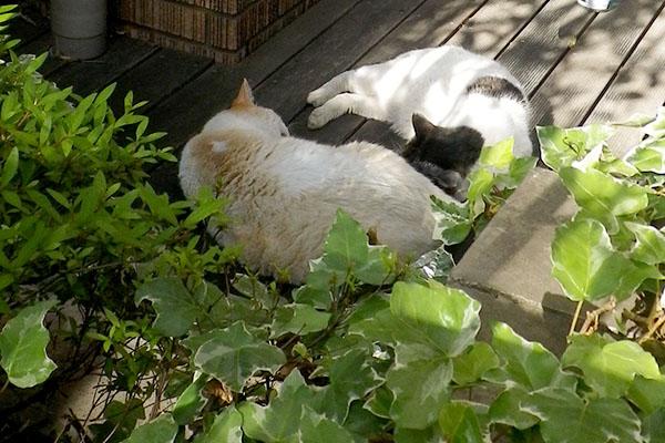 ウィンとアイルはピト寝