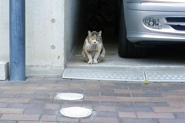 三毛猫さん正面