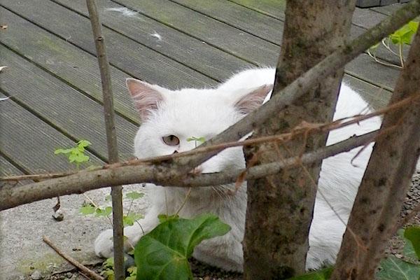 枝に邪魔される
