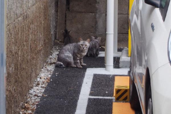 シルバと仔猫2