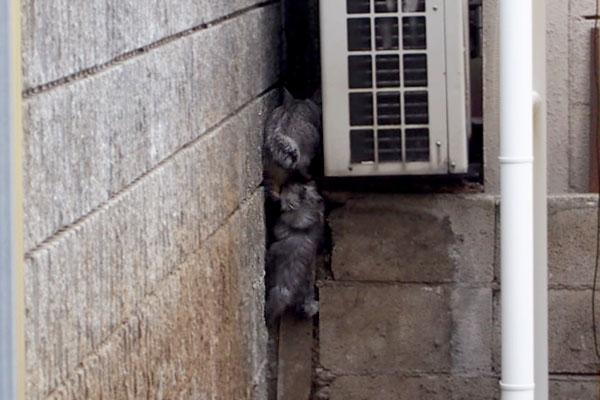 シルバ仔猫を踏んで逃げる