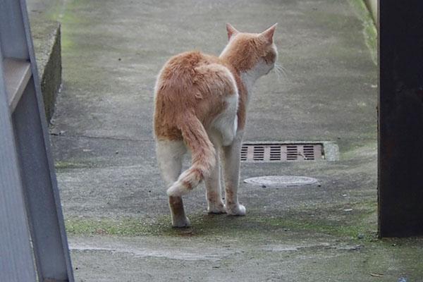 後ろ脚でカキカキ