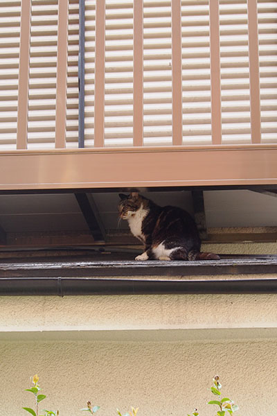 屋根と2階のベランダのすきま