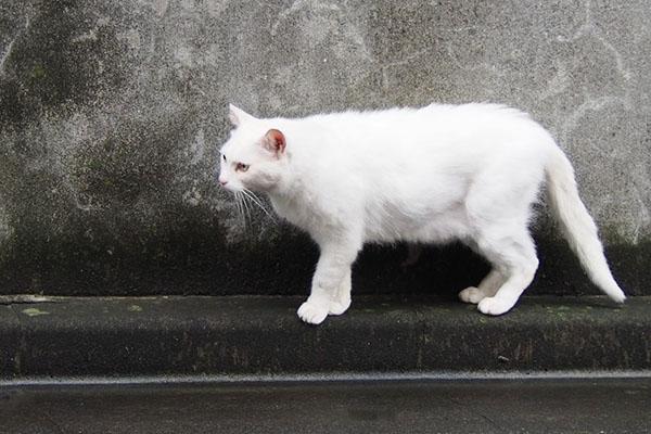 そろ~り退散白猫君
