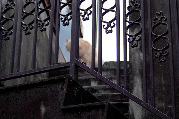 階段を登る茶トラ君