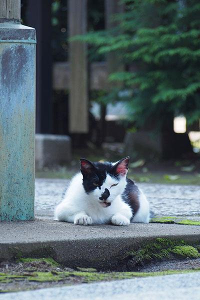 猫侍のイメージ