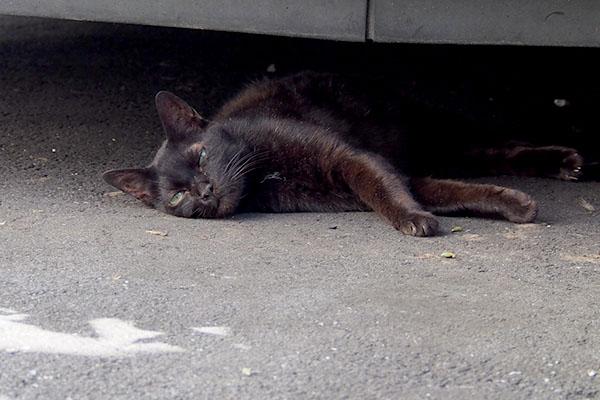 黒猫の女のコキキョウ