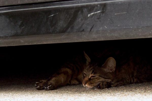 車の下にキジトラちゃん