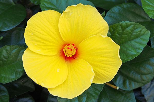 yellow_summerflower