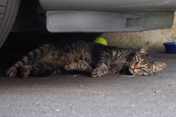 車の下のキリちゃん
