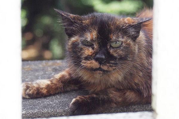 コワモテの猫侍風