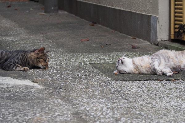またたびと2猫