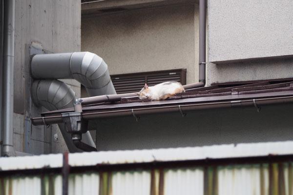 裏のお宅の屋根の上