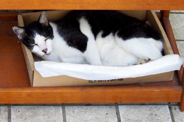 テルマは箱の中
