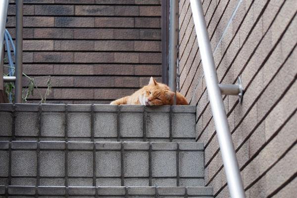 バル階段上