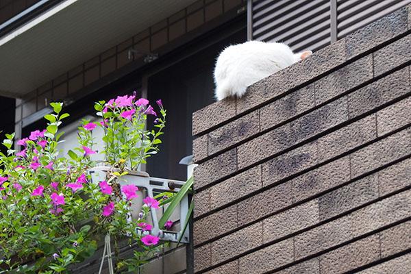 白猫さんのお背中