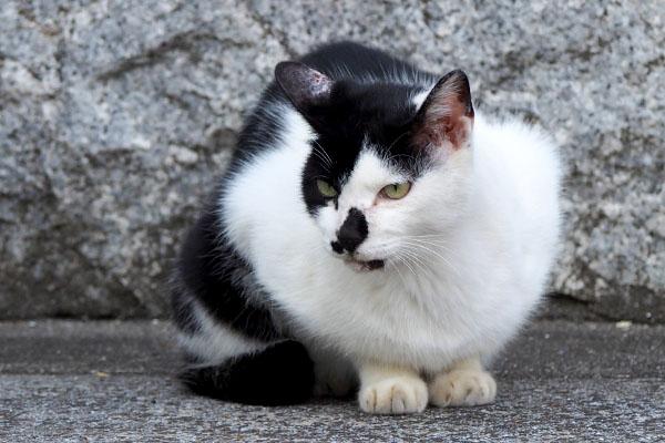 他の猫を見るムーン