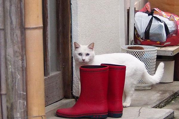 赤い長靴とリリ